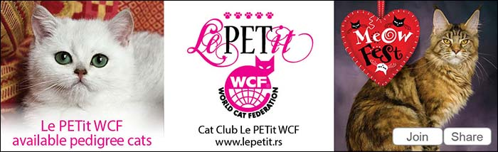 Le PETit available pedigre cats