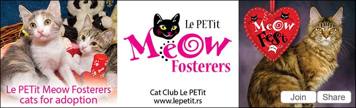 Le PETit Meow Fosterers - cats available for adoption